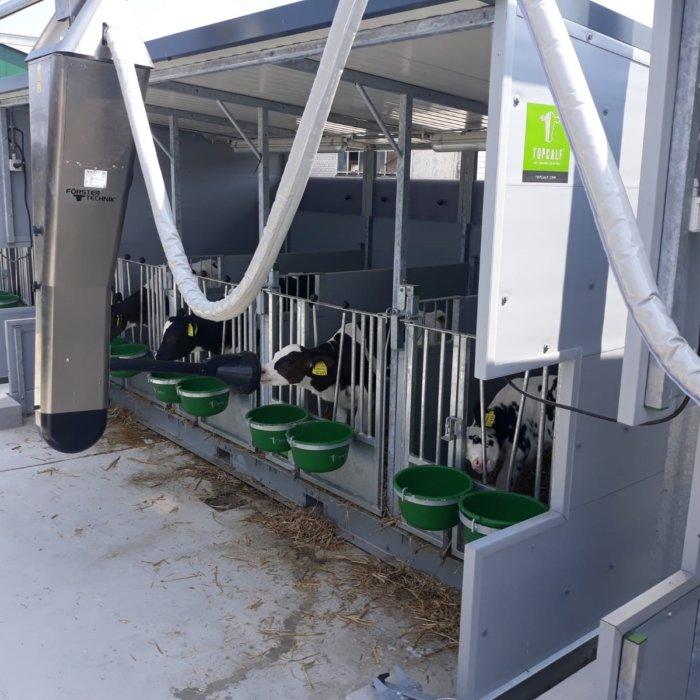 Logement des veaux avec système d'alimentation automatique